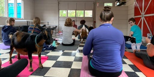Goat Yoga at Legacy Lane Farm