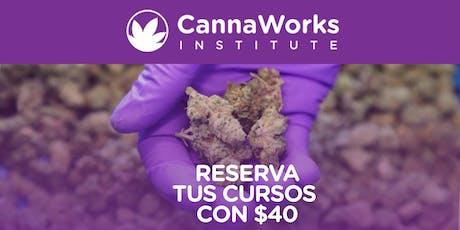 RESERVA | Cannabis Training Camp | CannaWorks Institute  entradas