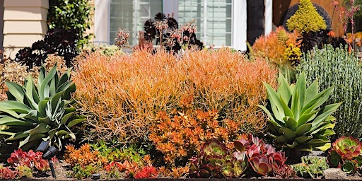 FREE Water-Wise Landscaping Workshop: Plant Selection