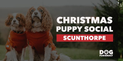 Christmas Puppy Social - Scunthorpe