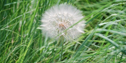 Common Utah Weeds & How to Control Them