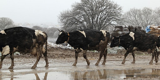 Extreme Farming: Farm Planning for Extreme Weather