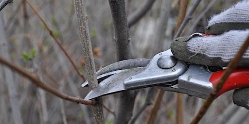 Work & Learn: Pruning