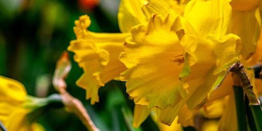 Annual Delaware Valley Daffodil Society Regional Show