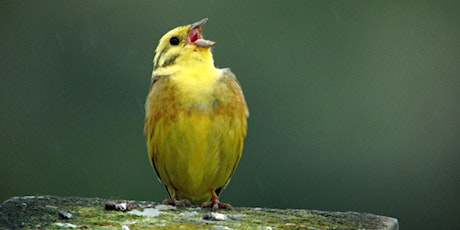 Introduction to birdsong tickets