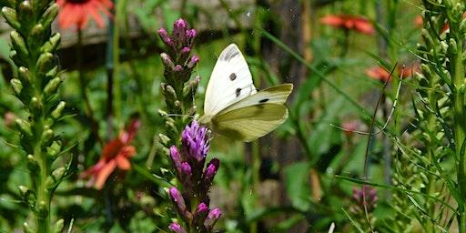 Gardening for Pollinators