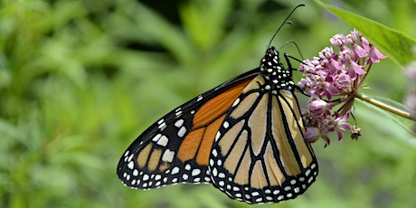 Butterfly Buffet Container Garden – A Workshop for Gardeners Aged 6-10 tickets