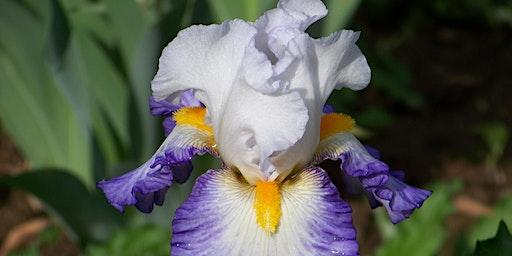 The Delaware Valley Iris Society Sale