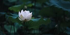 Slow Flow Vinyasa- Yoga Class