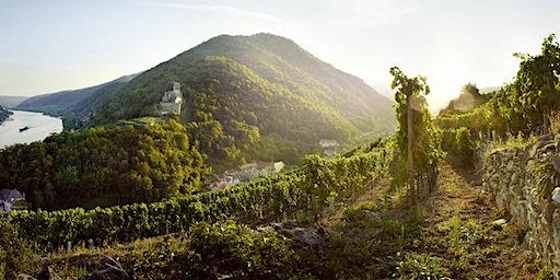 VINcabulary : Wines of the North - Alsace, Loire, and Austria