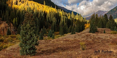 Colorado Aspen ~ Photo Tour 2020