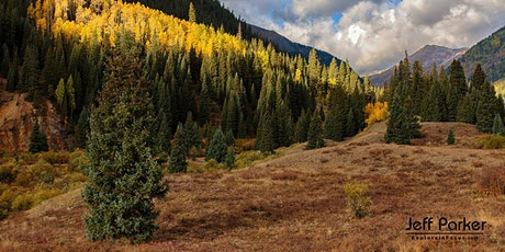 Colorado Aspen ~ Photo Tour 2020 tickets