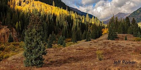 Colorado Aspen ~ Photo Tour 2020 tickets