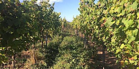 WineWise : The Green & Orange Wine Revolution tickets