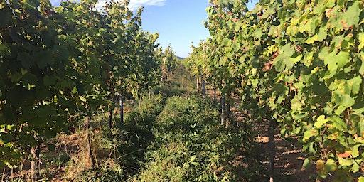 WineWise : The Green & Orange Wine Revolution