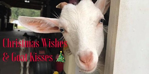 Christmas Wishes & Goat Kisses 2019