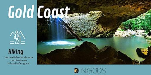 Dingoos Hiking Springbrook - Gold Coast