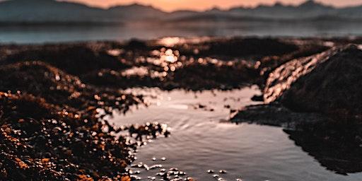 Coffs By Nature- Rocky Shore Xplore