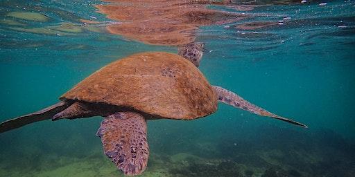 Coffs By Nature- Sea Turtle Walk