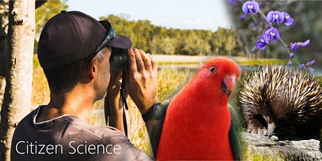 Love Nature Citizen Science - Birds of Woodlands and Wetlands tickets