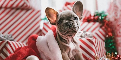 Hawaiian Bassendean's Christmas Pet Photography