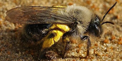 Wandeling 'Bij de bijen op bezoek'