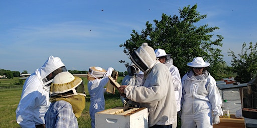 Beginning Beekeeping presented by Boone Regional Beekeepers Association