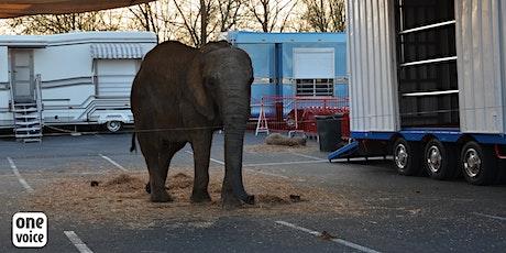 Pour Samba, l'éléphante «de cirque», un procès fictif (mock trial) billets