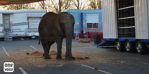 Pour Samba, l'éléphante «de cirque», un procès fictif (mock trial)