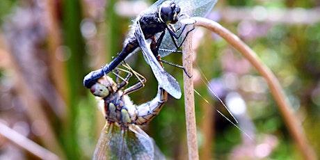 Dragonflies of Durham Wildlife Trust Region 2019 - Survey Results tickets