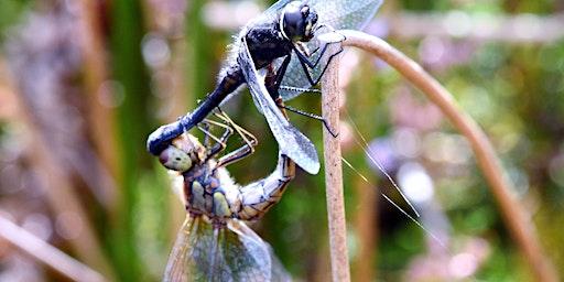 Dragonflies of Durham Wildlife Trust Region 2019 - Survey Results