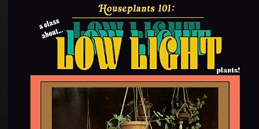 Low Light Houseplants with Eargardn