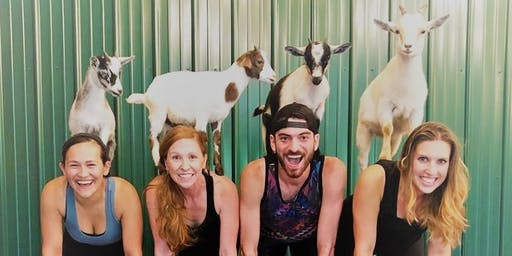 Indoor Goat Yoga by Shenanigoats - Nashville, Sat. @10AM