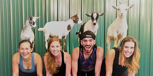 Indoor Goat Yoga by Shenanigoats - Nashville, Sat. @10AM