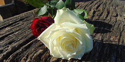 Master Gardener School: Roses in Central Florida