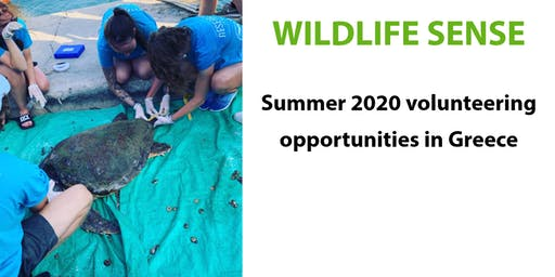 Protect the turtles in Greece - summer volunteering with Wildlife Sense