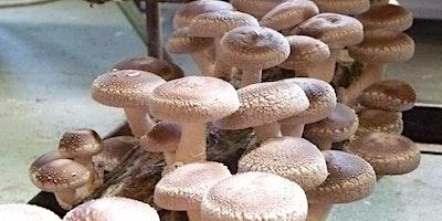 Cultivo de Cogumelos Comestíveis( Shiitake,Shimeji )15/02/2020
