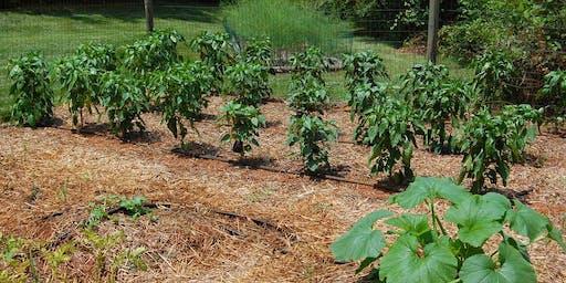 Warm Season Crops for Vegetable Gardens