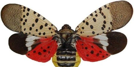 Spotted Lanternfly Workshop tickets