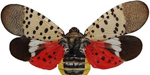 Spotted Lanternfly Workshop