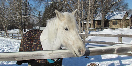 Pop Up Holiday Horse Ride tickets