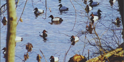 Waterfowl Study Trip to Blackwater National Wildlife Refuge