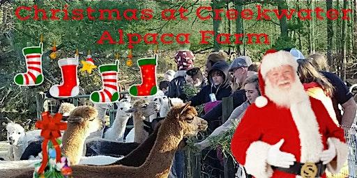 Christmas at Creekwater Alpaca Farm