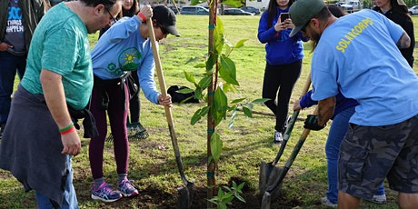 Tu B'Shvat & MLK Day of Service Tree Planting Event tickets