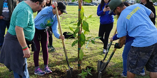 Tu B'Shvat & MLK Day of Service Tree Planting Event