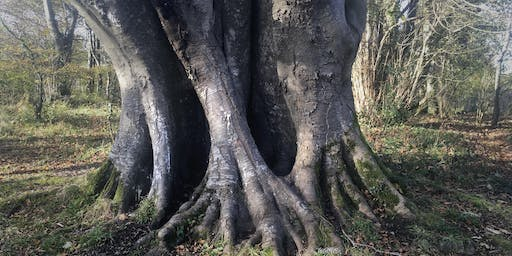 Us And Trees - What Can We Do?