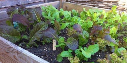 Cool Season Crops for Vegetable Gardens