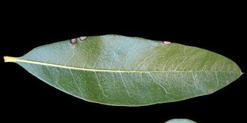 Native Tree Identification