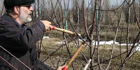 Pruning and Care of Landscape Fruit and Nut Trees tickets