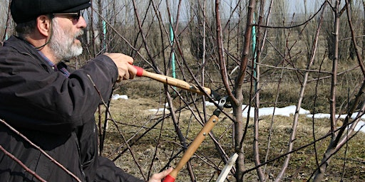 Pruning and Care of Landscape Fruit and Nut Trees
